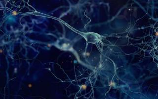 hD2R Neurons