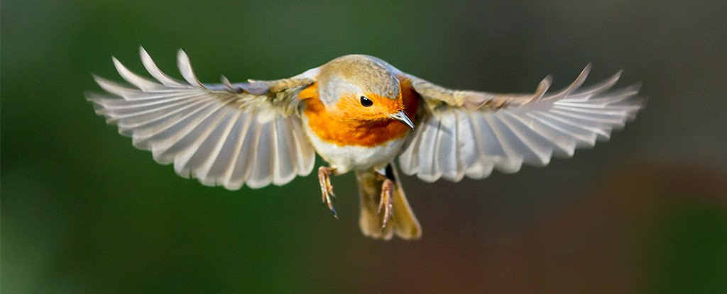 Magnetoperception - Bird
