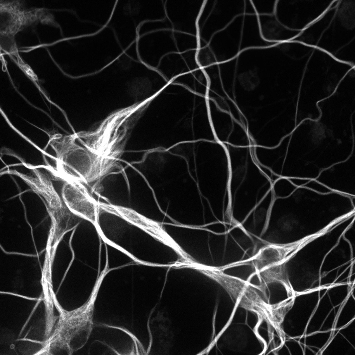 neurons 18mm_RGB